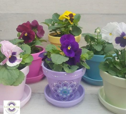 This image has an empty alt attribute; its file name is web-pic-dotting-pansy-pot-1.jpg
